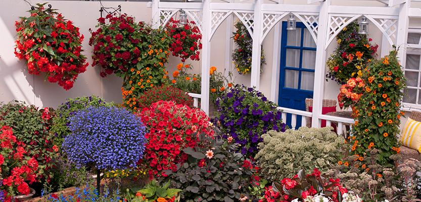 summer bedding plants busy baskets nursery. Black Bedroom Furniture Sets. Home Design Ideas