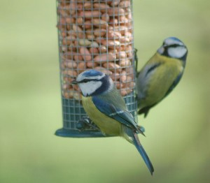 birds-on-feeder-julie-seery