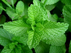 Mint-leaves-2007